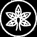 korotko-o-glavnom-ico